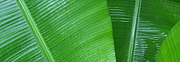 green_usvi.jpg